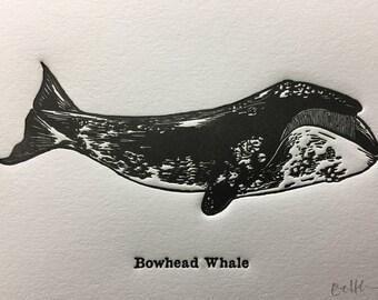 Bowhead Whale Letterpress Print
