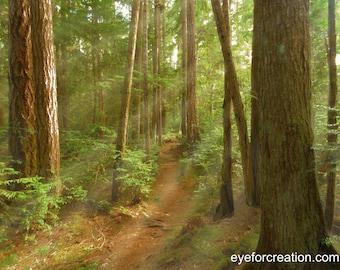 Sunrays Through the Woods