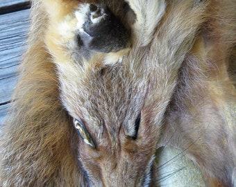 Tanned Red Fox Pelt