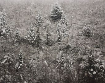 Snowy Trees Photograph