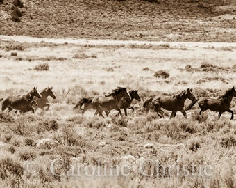 """Wild Horse Photography,Equine Photos, Sepia Tone, Mustangs. Stallions. """"Follow the leader"""""""