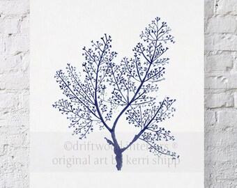 Sea Fern in Denim Print 8x10 - Sea Life Art Print - Coral Art Print - Blue Coral Print - Seaweed Giclee Print - Marine Life Print