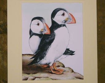 Puffins, 8x10 Print from Original Watercolor and Ink Illustration, Pair of Puffins