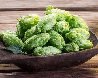 HOPS Seed Seeds Grow your OWN hops for Home Brew Brewing Beer 50 Seeds