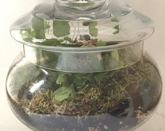 LARGE Moss Terrarium Kit