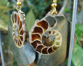 Moss Green Ammonite Earrings