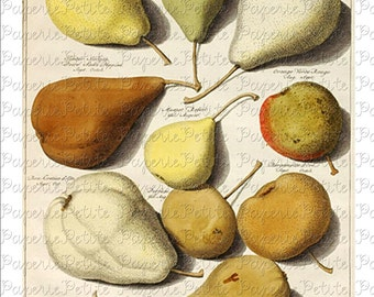 Pears Digital Download Collage Sheet