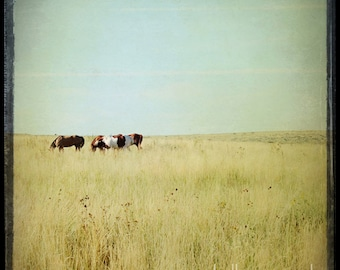 Horse Photograph, horse photography - 8x8 horse photo - nature photography, landscape, field pasture, wild horses