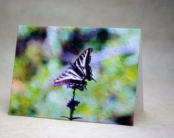 Seed Paper Butterfly Print Recycled Cotton Blank Notecard Set - Northwest Photography