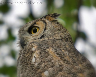 Owl Photography, Great Horned Owl Wildlife Bird Photography Fine Art Photo