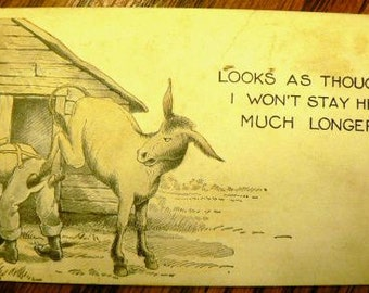 vintage postcards ... DONKEY COMIC Looks As Though  .. POSTCARD . ..