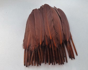 set of 10 feathers Brown 10-15cm