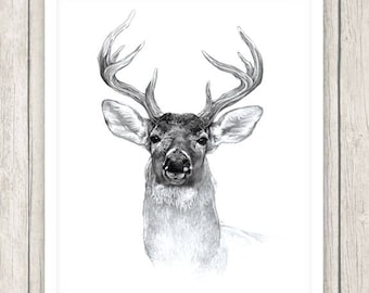White-tailed Deer - Original Illustration