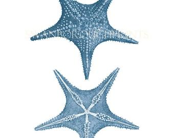 Blue Starfish Print, Sealife Drawing, Wedgwood Blue Starfish. Coastal Home Beach Style Print, Blue Sea Star, Starfish Print, Blue Bathroom
