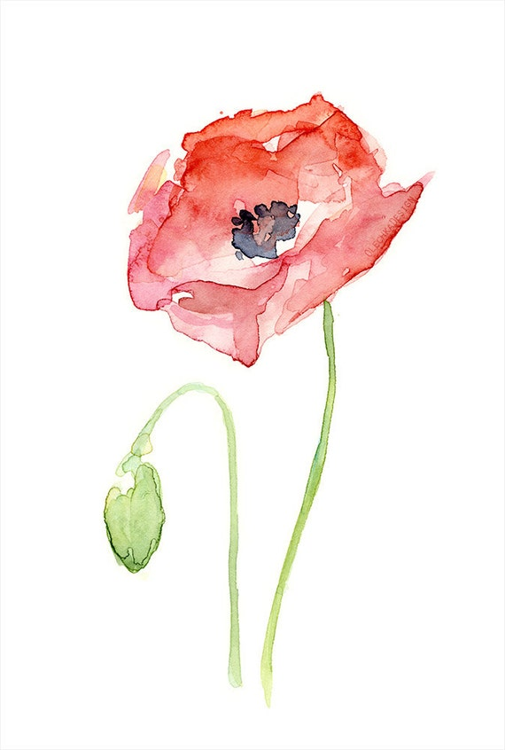 Red poppy flower art print of watercolor painting plants red poppy flower art print of watercolor painting plants nature poppies mightylinksfo