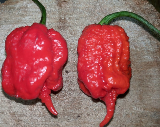 Red Carolina Reaper Chile Seeds -  HOTTEST CHILE on EARTH!!  Summer 2017 Crop