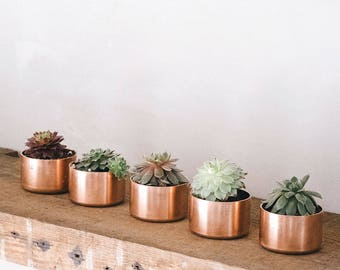 Copper Pots for Plants / Ring Pot / Trinket Pot with Succulent