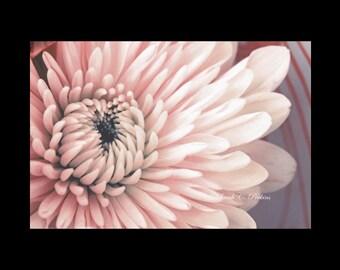 Pink Floral Print-Flower Wall Art-Simple Wall Decor-Salmon-Minimalist-Horizontal 30x40-Fine Art Photograph-Living Room Art-Guest Room Decor