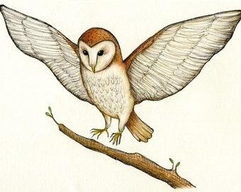 barn owl in flight original ink and colored pencil drawing