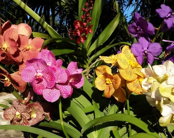 Vanda Orchid Select your Color
