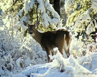 CARD, photo, deer, doe, snow, winter, trees, whitetail deer, Ellen Strope, castteam, note cards, greeting cards, paper goods, blank cards