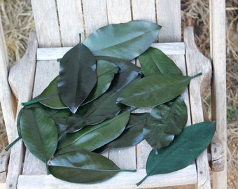 Magnolia leaves preserved 100 green - Gift wrapping-Party Favors-Wedding invitations