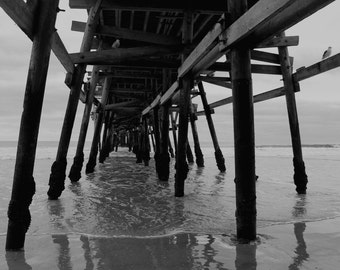 Under the Pier, Seagull, Black and White, San Clemente Pier, California