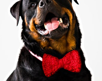 RED Knit Dog Bow Tie! Vegan knit, hand knit, chunky knit, dog bow tie, dog bowtie, vegan gift