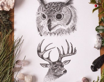 Owl and Buck Art Print Black and White Botanical Pen and Ink