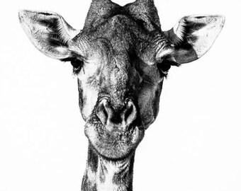 Giraffe Fine Art Photography - Wildlife Art - Modern Wall Art - Black and White Photo - Monochrome Wild Animal