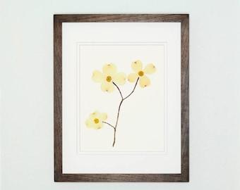 Pressed Botanical Art Print, Dogwood Print #101, Botanical Print, Fine Art Print, Wildflower Print, Pressed Flower Art, Botanical Wall Art