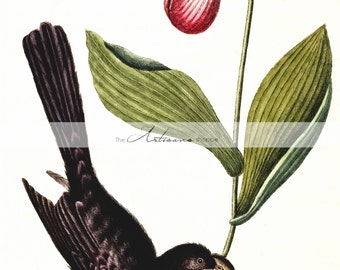 Black Bird & Lady Slipper - Digital Download Printable Image - Paper Crafts Scrapbooking Altered Art - Bird Magpie Pink Lady Slipper Flower