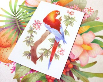 Parrot Illustration – Cuban Red Macaw – Parrot Art Print - Extinct Bird – 4x6 Print – Bird Lover Gift