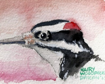 5 x 7 print Watercolor bird painting Hairy Woodpecker Artist signed