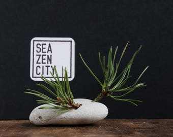 Coastal Decor - Natural Rustic Wabi-Sabi Decor - Holey Beach Stone and Pine Tree Branch