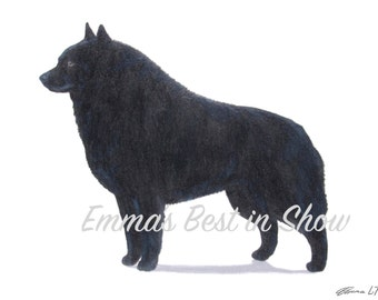 Schipperke Dog - Archival Fine Art Print - AKC Best in Show Champion - Breed Standard - Non-Sporting Group - Original Art Print