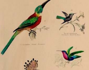 """1862.Antique print.Engraving hand colored.155 year old print.Museum of Natural History.Hummingbird.Bee-eater.Hoopoe..10.6x7"""",18x27 cm."""