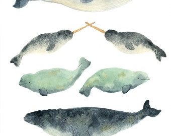 Narwhal Sandwich Print