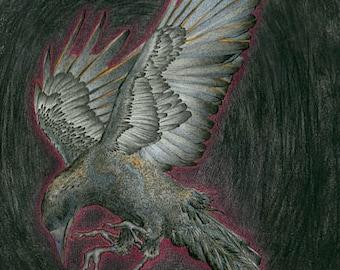 The Raven Who Plucks