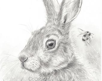Hare print, hare pencil drawing, hare artwork, hare graphite, hare drawing hare picture