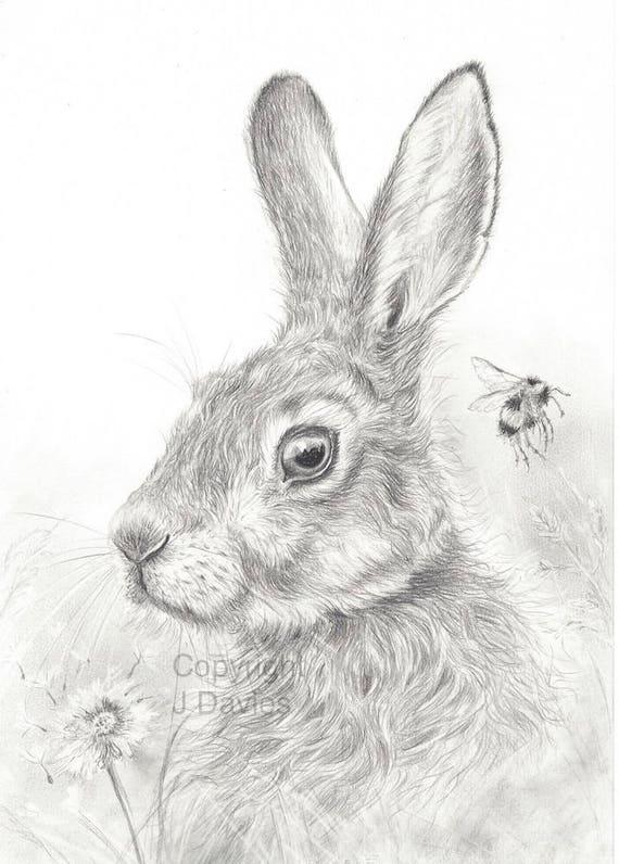 Hase zu drucken bleistift zeichnung hase hase kunstwerk - Hase zeichnen ...