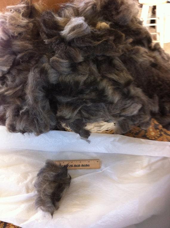 One lb. Pound Raw Alpaca Hucaya fiber fleece