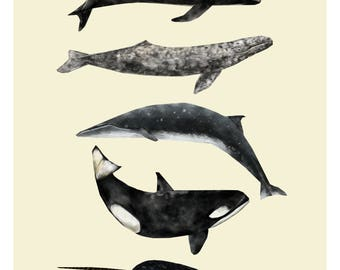 Whale Print, Nautical Print, Animal Print, Whale Illustration, Whale Drawing, Nautical Art