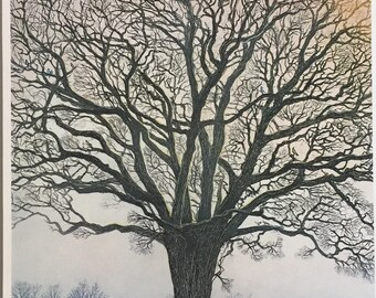 Great White Oak, print from original etching by Gerald Hardy, favorite tree on Rt.41 between Sharon and Lakeville Ct-detailed with birds