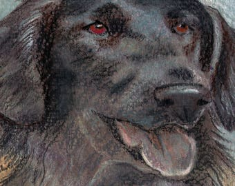 original art  aceo drawing black dog flat coated retriever lab