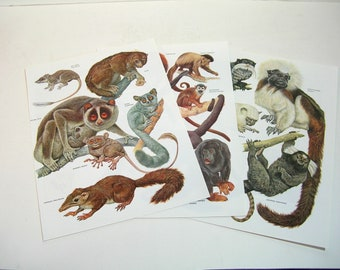 Book Page Prints, Mammals, Bushbaby, Monkeys, Marmoset, Three Ready To Frame Prints