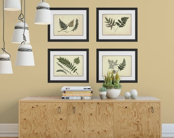 Fern Prints, Fern Wall Art, 4 Print Set, Botanical Print Set, Fern Illustrations, Housewarming Gift