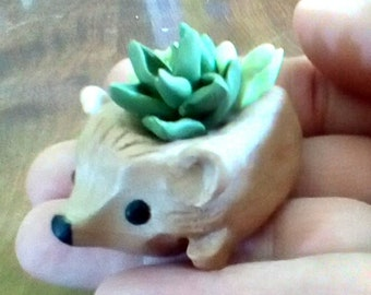 Tiny Hedgehog and Succulents Figurine  polymer clay ... Cute Hedgie !
