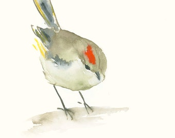 Fine Art Print from Original Watercolor Painting Ruby Crowned Kinglet