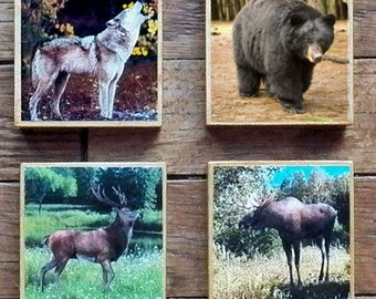 Forest Animals Accents